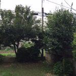 【絆レポート】深谷市 ご新規のお客様 庭木の剪定作業の詳細へ